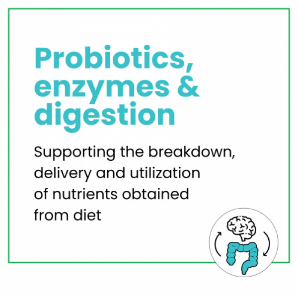 Wellbeing Nutrition Daily Probiotic + Prebiotic for Digestion & Gut Health, 21 Tablets (Pack of 2)